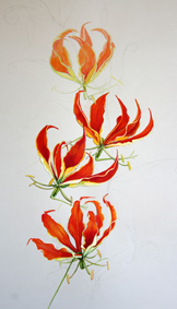 flame lillies